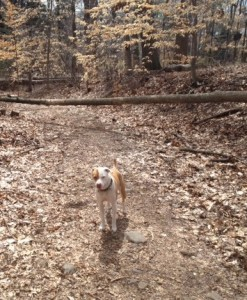 Shay (off leash) in the reservation.